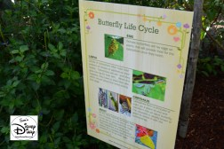 The 2017 Epcot International Flower and Garden Festival - Butterfly Life Cycle - inside the Butterfly House