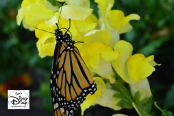 The 2017 Epcot International Flower and Garden Festival - Get up close with a Butterfly
