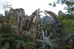 Beautiful view of the valley - you are completely disconnect from Animal Kingdom