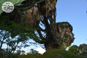 A few from under the floating mountain...