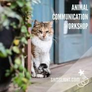 動物傳心及動物治療課程