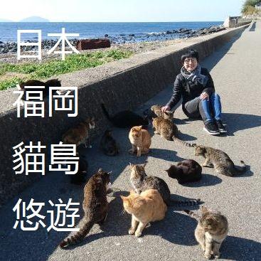 日本福岡貓島悠遊