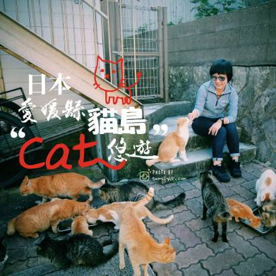 aoshima-cat-island-trip-cover