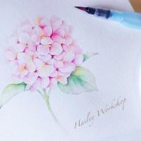 Hydrangea Watercolour Brushpen Painting Class 繡球花水彩軟筆畫班