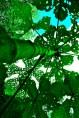 Plant life; Iquitos - image by Sam Slovick