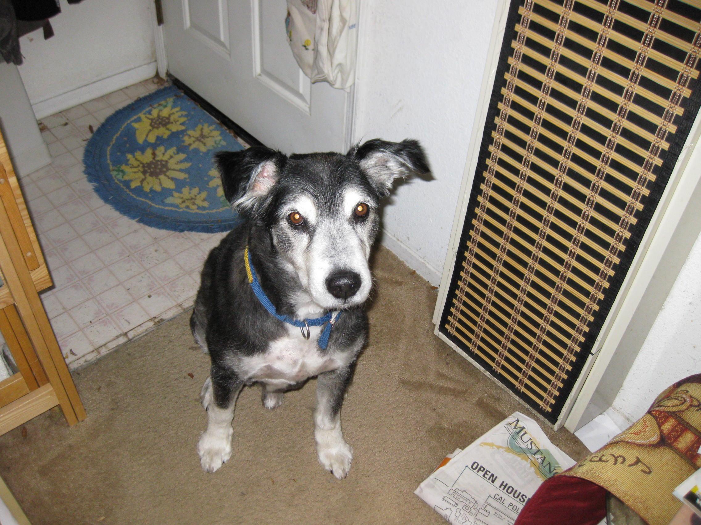 Major Pup