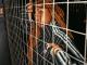 Dee Koala – Ndintswempu Ft. Amilca Mezarati & SimulationRxps [Audio]