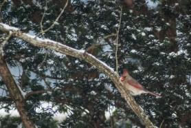 15-2-15 Snow Birds-16
