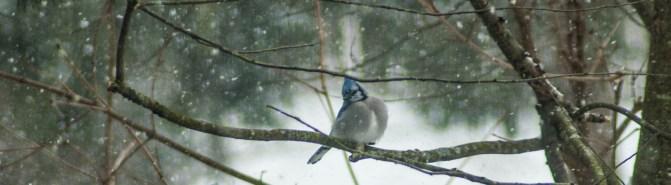 15-2-15 Snow Birds-9