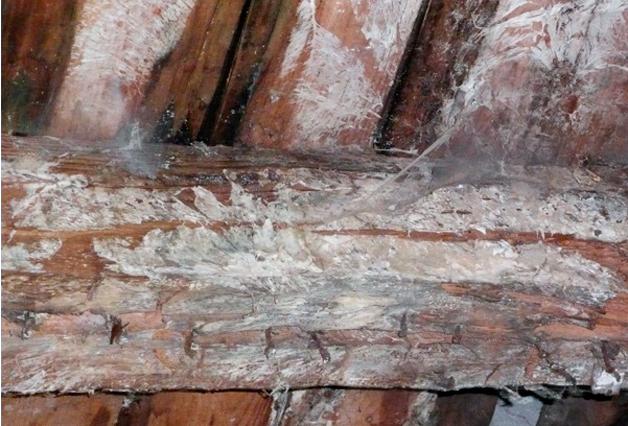 вывести грибок в подвале деревянного дома