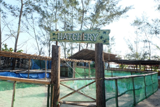 Pawikan Conservation Center's Hatchery