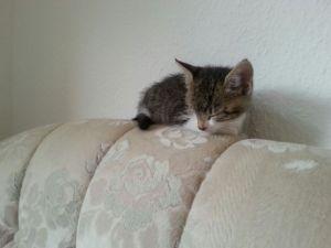 Elvis liegt die Couch ein