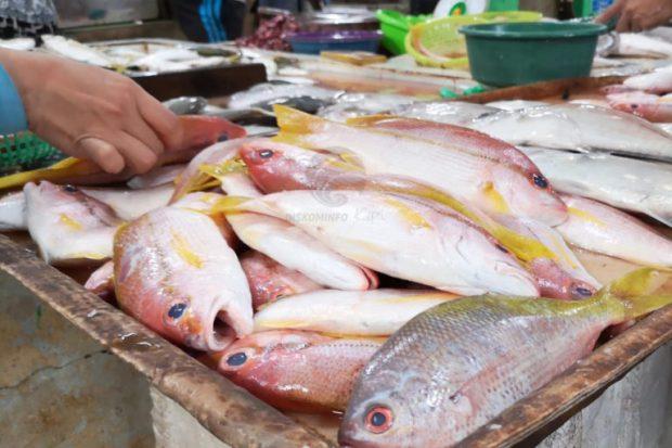 , Harga Ikan di Tanjungpinang-Kepri Tidak Stabil, SamuderaKepri