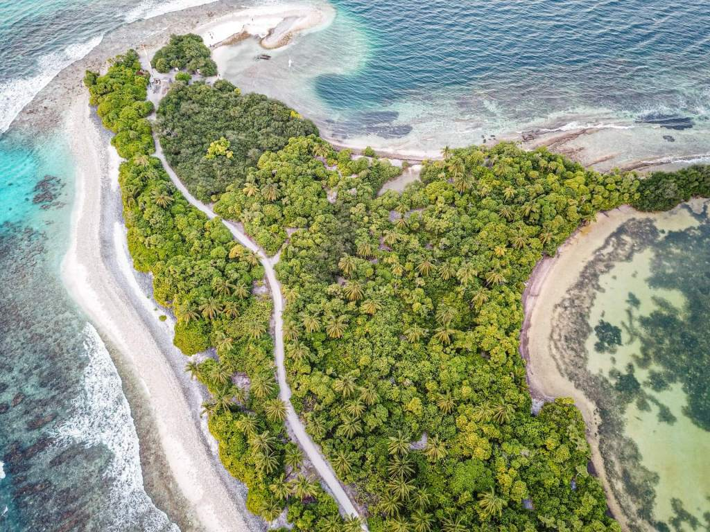 Insight into Maldives' Mangrove Ecosystem