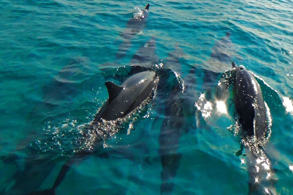 Dolphin Watching & Cruise with Family in the Maldives