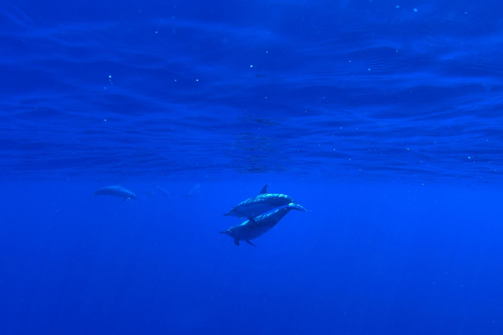 Maldives Sunset Dolphin Cruise Trip