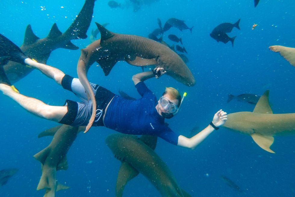 Swimming & Snorkeling with Sharks in the Maldives