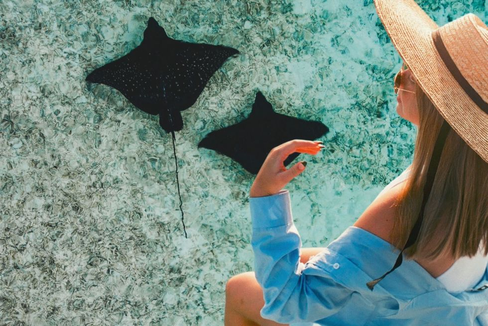The Best Spots for Manta Ray Watching Maldives