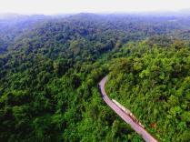 Drohnenaufnahme über Dschungel