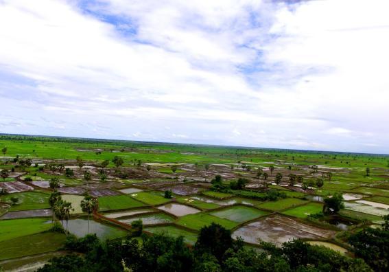 Reisfelder in Kambodscha