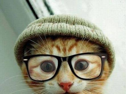 Tips for non-tech founders - hipster cat