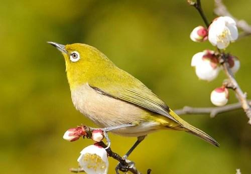 【24の季節とネクタイ】2/4~2/18頃は二十四節気『立春(りっしゅん)』春を告げるささやかな兆しを見つけるよろこび。ほころぶ顔。
