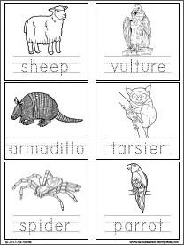 Animals_2p3