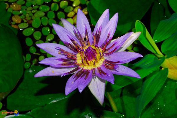 самые красивые цветов