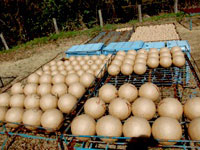 玉の乾燥写真
