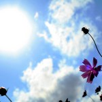 【8/6、9、15】祈りで地球を包む ~ earth healing ~【祈り人集結イベント】