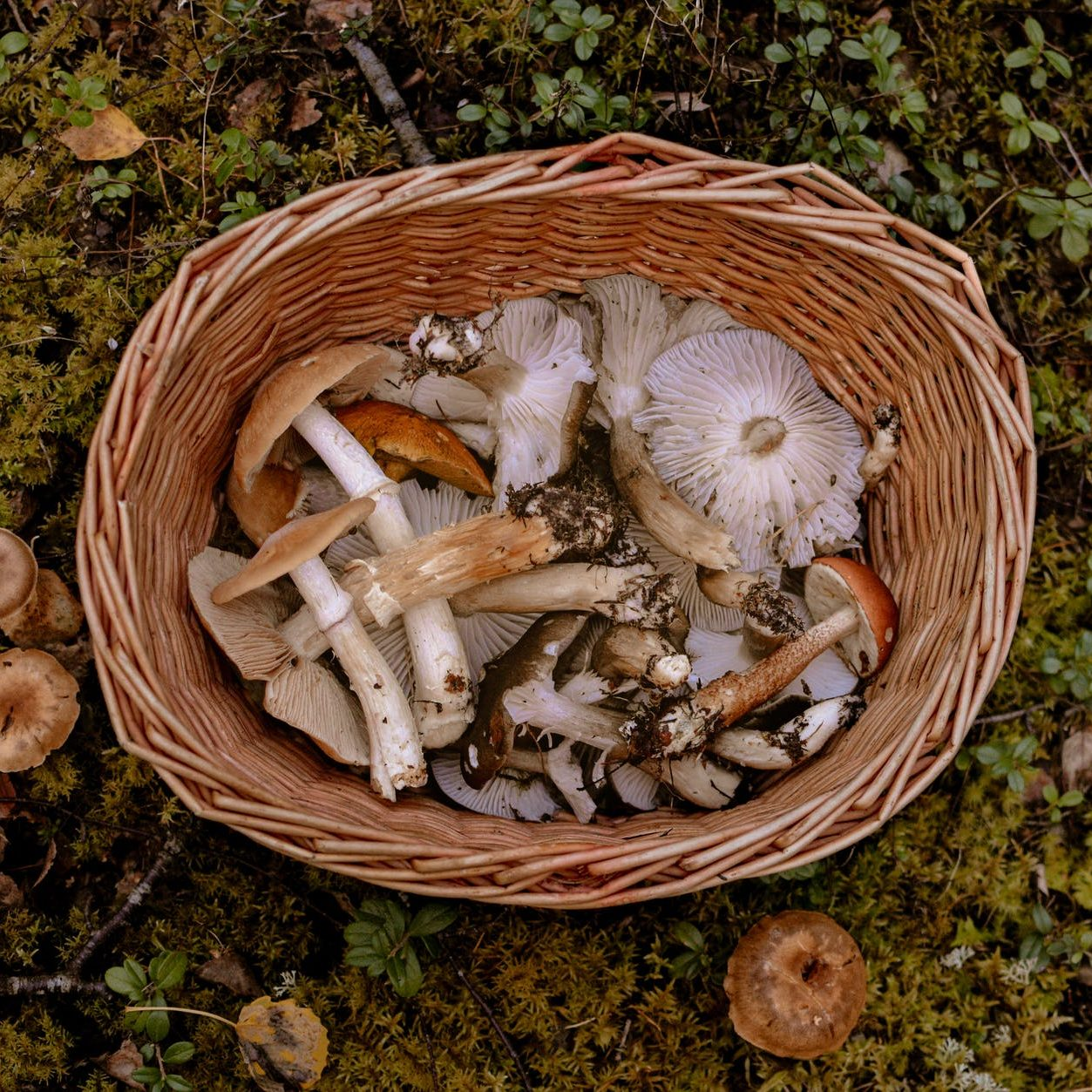 brown and white mushrooms in brown woven basket