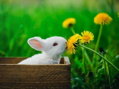 kozmetika koja nije testirana na životinjama