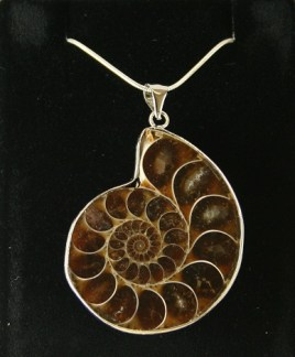 An Ammonite Fossilized Shell is a very powerful tool to negate negative energies. It also helps us achieve our goal and bring us financial and career success. However, ammonites are very expensive because this fossil actually preserved the shells formed by prehistoric cephalopods, which are extinct distant relatives of squids. I have two ammonites. I got one that's really affordable and I thought I got a good discount, it turn out that its a fake ammonite. I then looked for a real ammonite and eventually found one but it did cost quite a small fortune. But I'm happy with it because fake ammonites are basically useless.