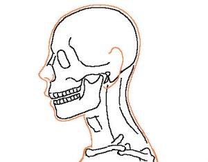頭蓋骨透け横顔