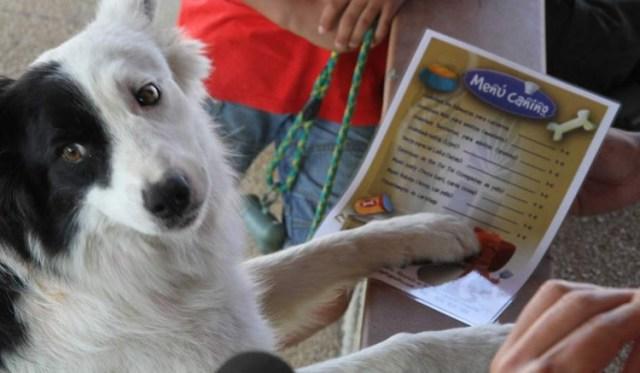 Portugal regula la entrada de mascotas en locales de hostelería