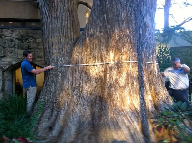 Big Bald Cypress