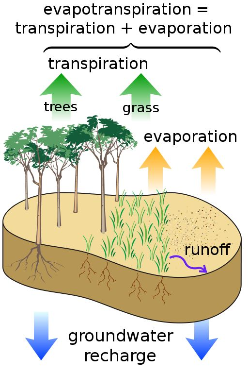Evapotranspiration explained