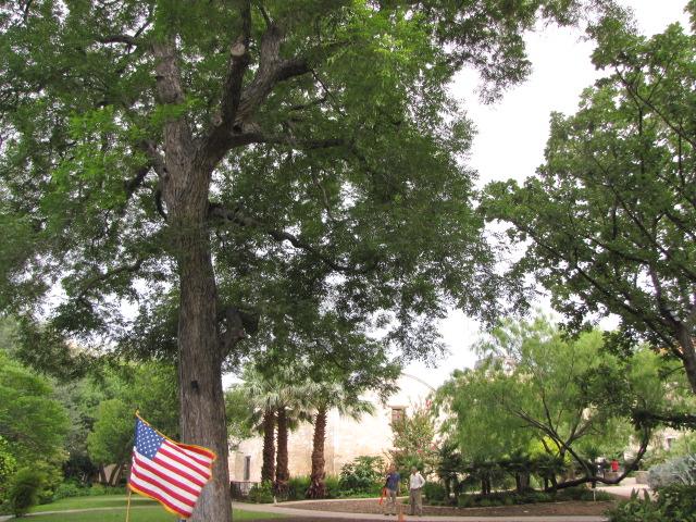 Under the shade of the Alamo Pecan Tree