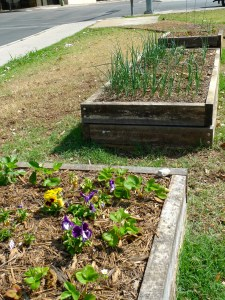 The raised beds at Little Patch Garden. Photo by Catherine Meyrat