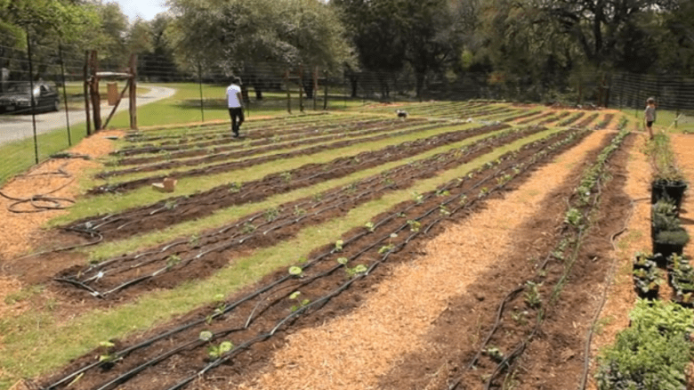 Truckin' Tomatoes will provide produce from several local farms via Farm to Table's distribution services. Helotes Creek Farms, established in 2012, is one such farm. Image from Carlos Maestas.