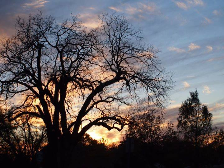 Brackenridge Park inspiration photo by Gary O. Smith.