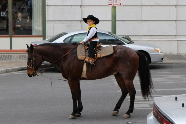 Western Heritage Parade and Cattle Drive 2014. Photo by Page Graham.
