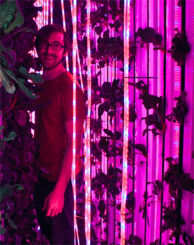 LocalSprout CEO Mitchell Hagney expertly monitors his hydroponic crops. Photo by Iris Dimmick.