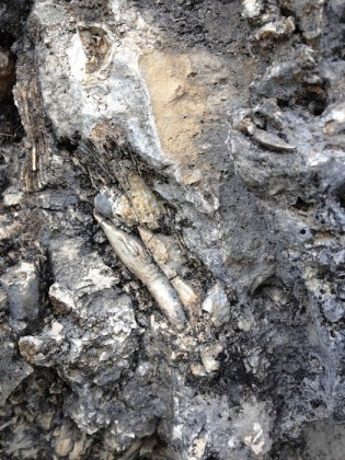 Caprinid fossils near the Guadalupe River in Wimberly. Courtesy photo.