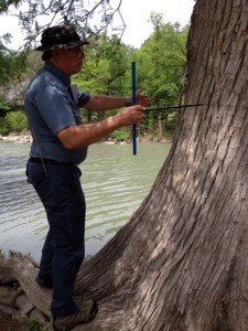 Malcolm Cleaveland uses an extracting tool to date a tree. Photo by Robert Rivard.