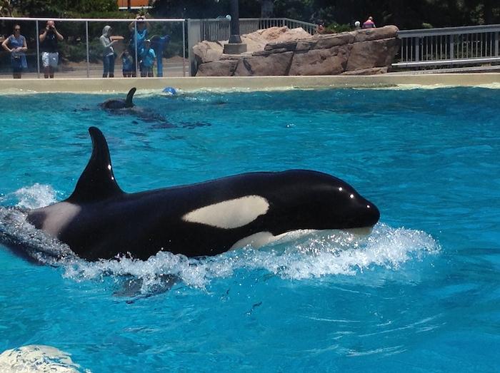 Seaworld San Diego. Photo by In Defense of Animals courtesy of Melissa Gonzalez.