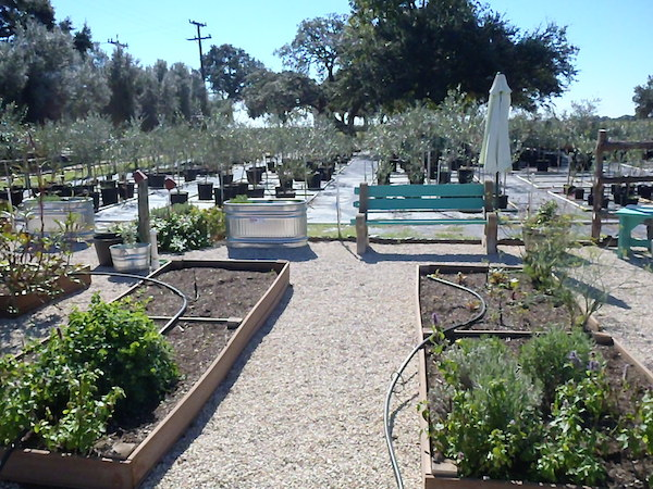 A small part of the fruit, olives and veggies grown in the Sandy Oaks Orchard.