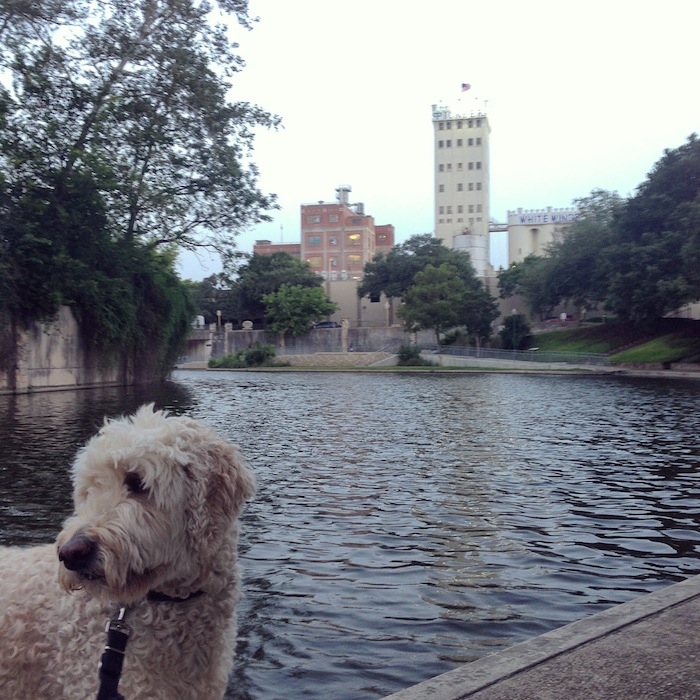 Acie walking on the River Walk in Southtown. Photo by Kelly Beevers.