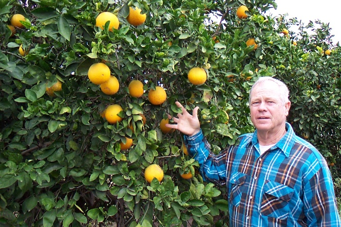 David Strohmeyer stands in front of an orange grove at C&S Groves in southern Texas. Photo courtesy of David Strohmeyer.