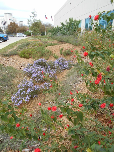Rain Garden at the San Antonio River Authority's Environmental Center off of Euclid Avenue, demonstrating one method to protect the watershed and improve water quality. Courtesy photo.